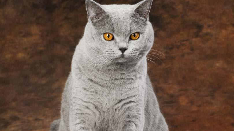 cat-125