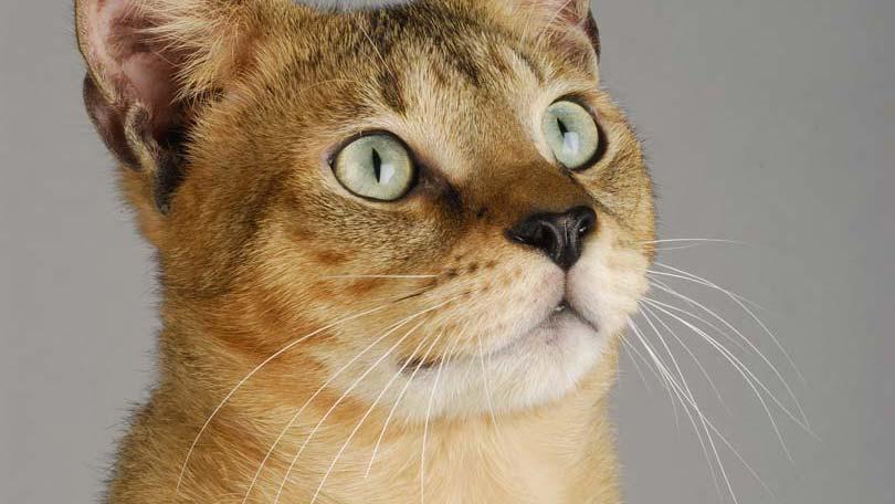 cat-14
