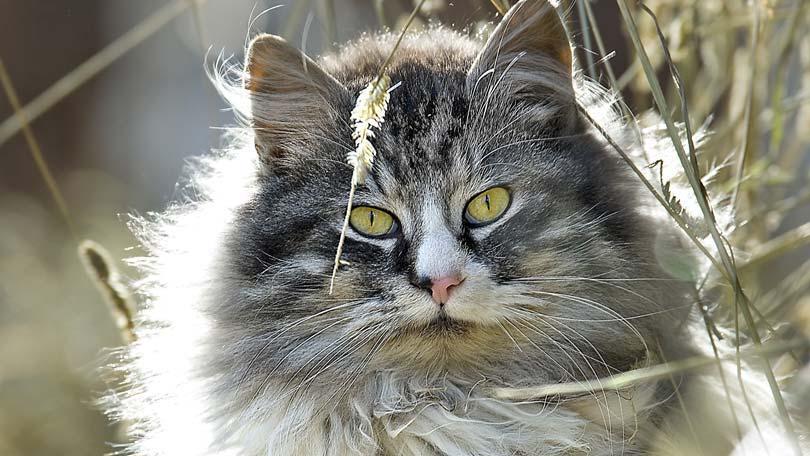 cat-145
