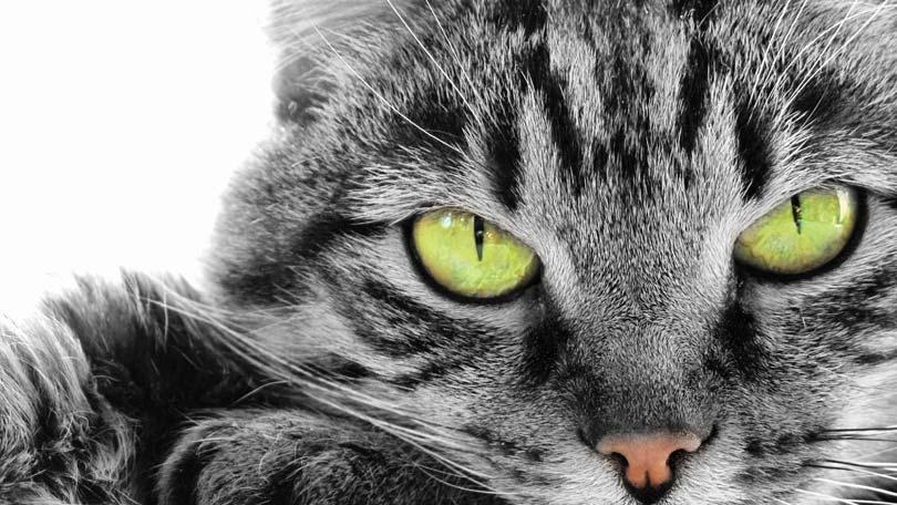 cat-174