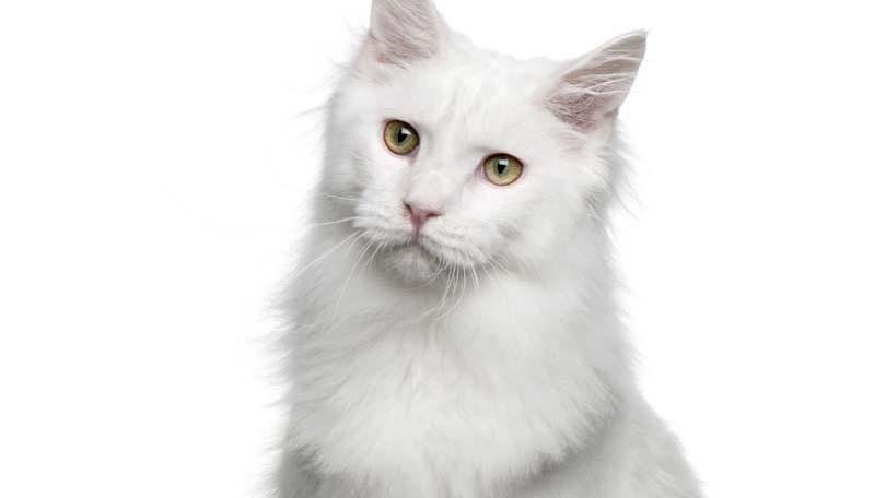 cat-178
