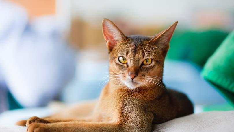 cat-18