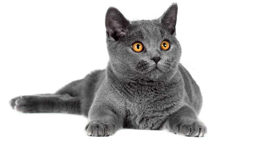 cat-41