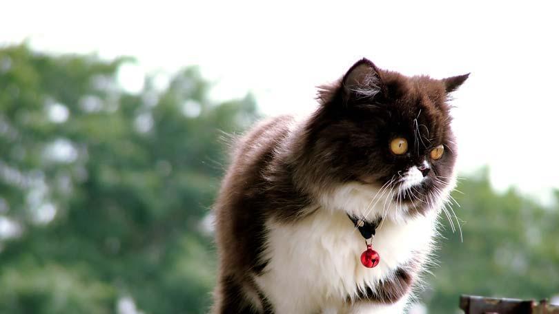 cat-49