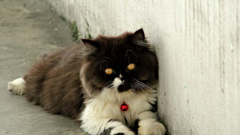cat-51