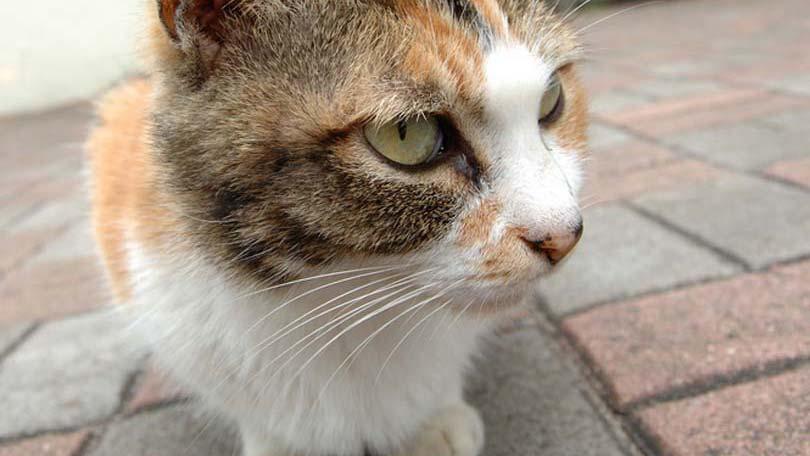 cat-78