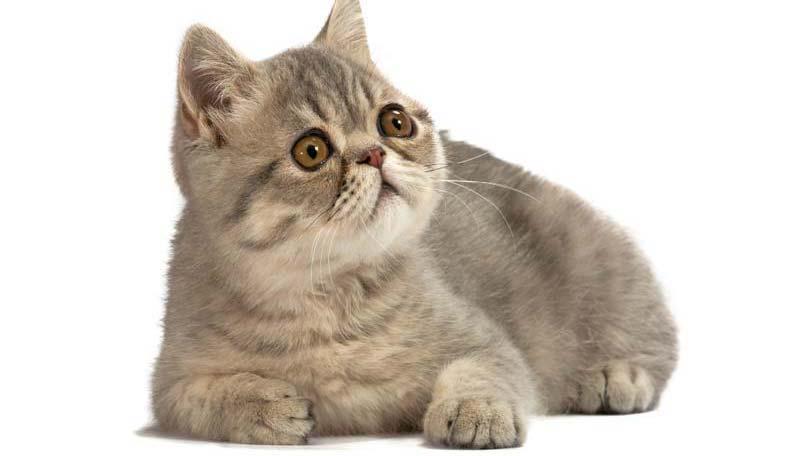 cat-8