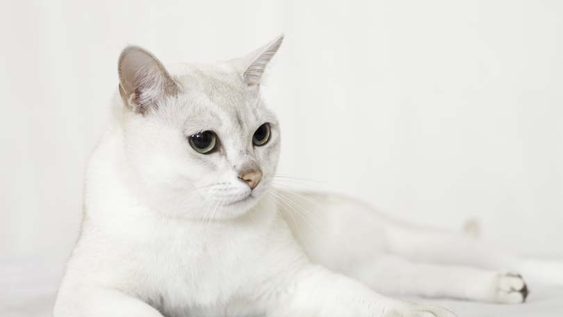 cat-86