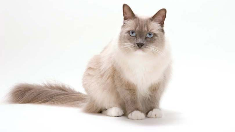 Can Cats Get Fiv To Dogs