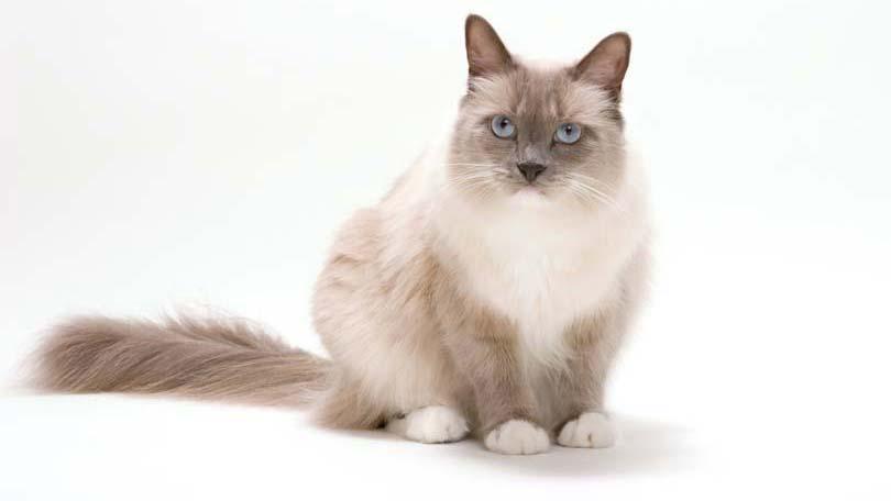 cat-99