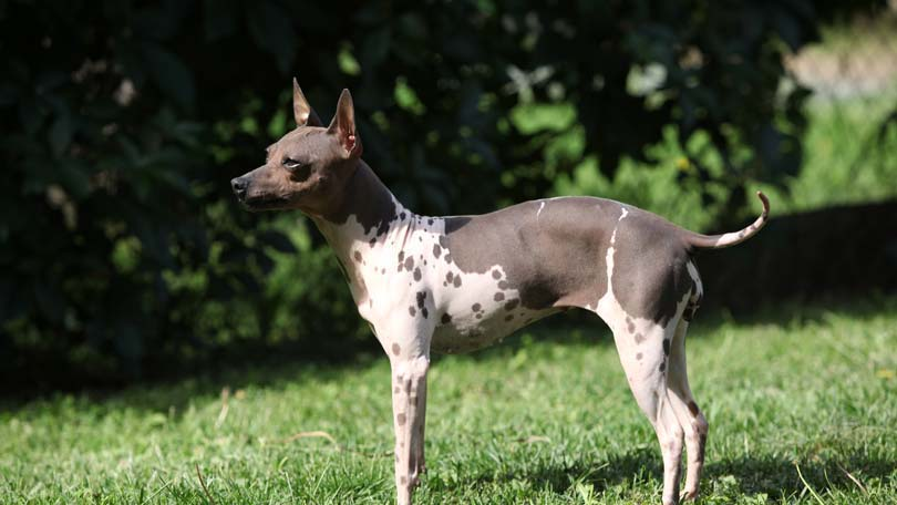 dog-358