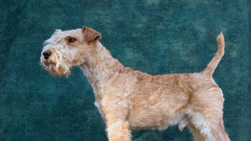 dog-415