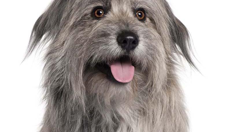 dog-426