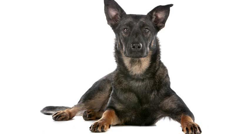 dog-493