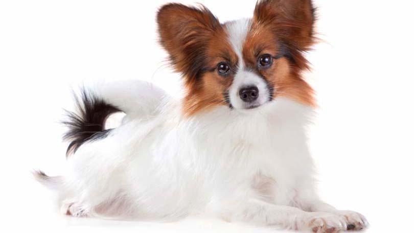 dog-565
