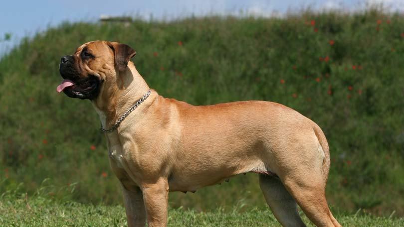 dog-578
