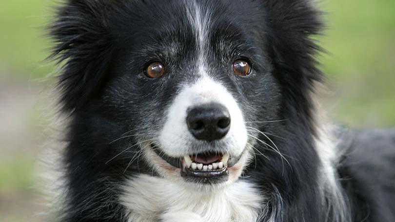 dog-588