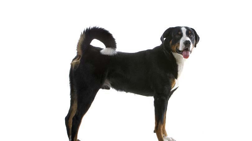 dog-600