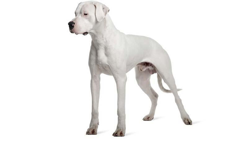 dog-632