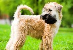 Pet Travel to UK – Taking Your Dog or Cat to the United Kingdom