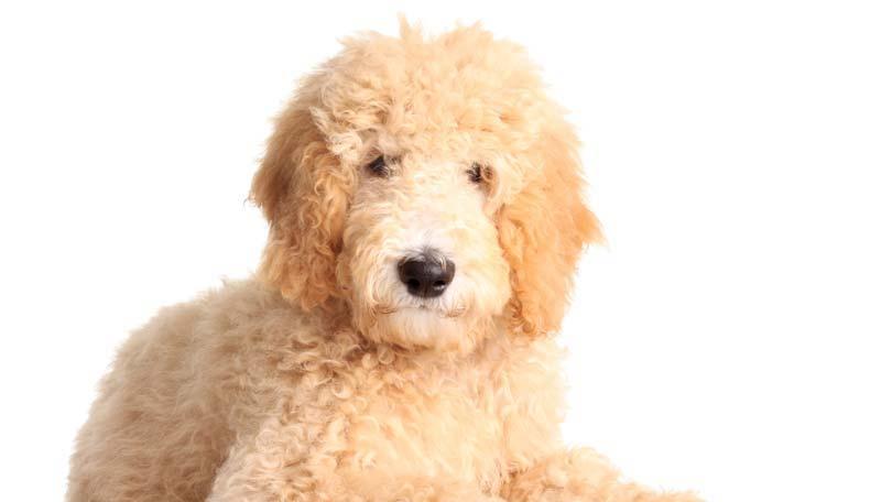 dog-649