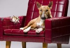 Is that Couch or Sofa Pet-friendly?