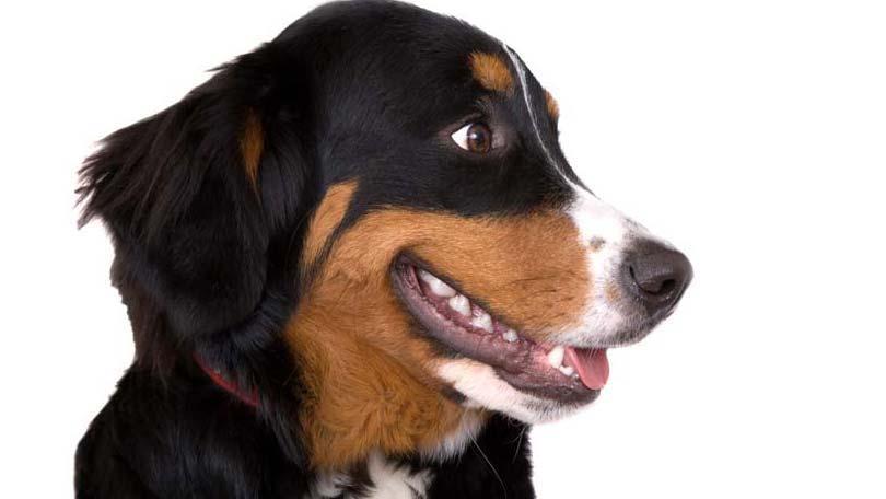 dog-679