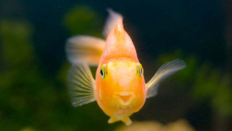 fish-11