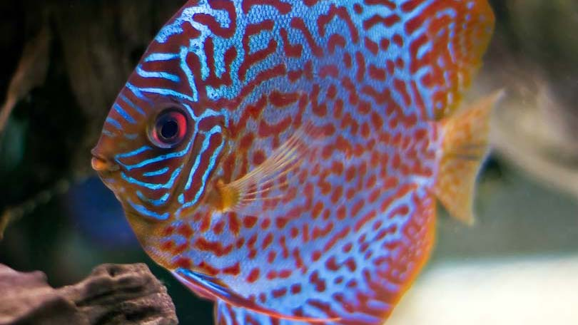 fish-25