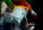 Understanding Fish Food