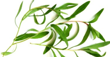 Tarragon – Commonly Used in French Cuisine