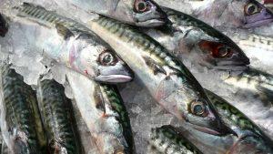 Buying Fish – Tips on Purchasing Fresh & Frozen Fish