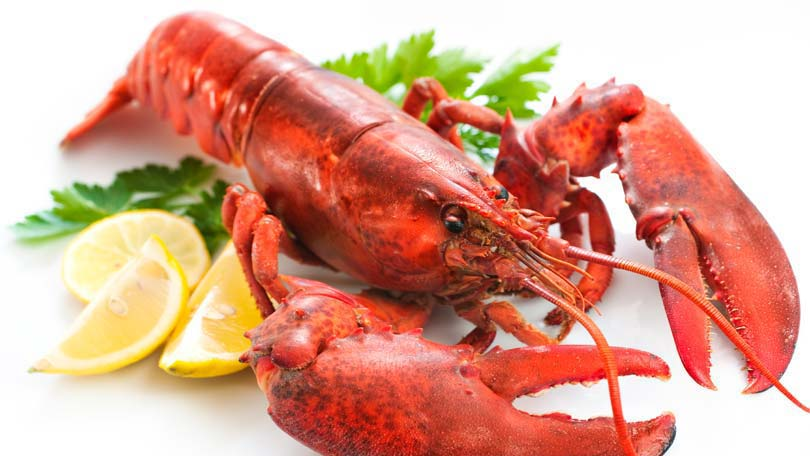 Types of Lobsters - Clawed and Spiny Lobster