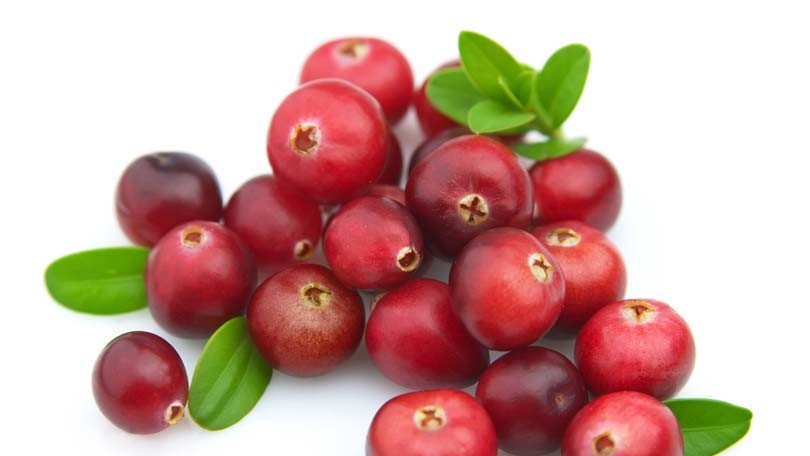 Cranberries – Trivia and Information