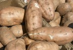 Sweet Potatoes Facts and Fallacies