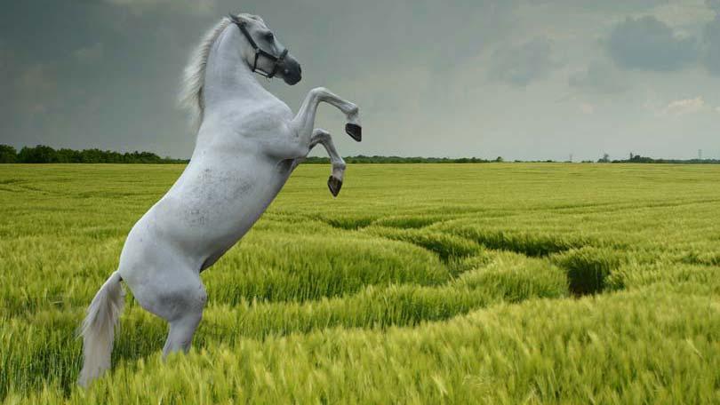 horse-13