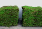 Sod – Choosing, Preparation and Planting