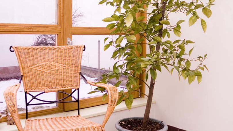Tropical House Plants large tropical house plants - filling your home with plants
