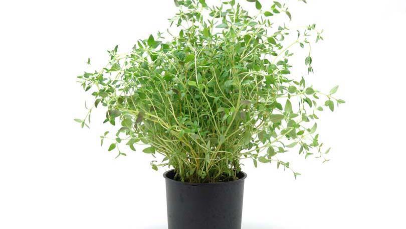 plants-47