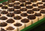 Tips for Successful Germination