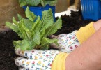 Selecting Potting Soil – A Staple for Growing Plants and Flowers