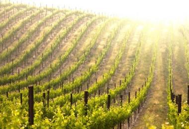 California Wine – Will it be Merlot or a Cabernet Sauvignon