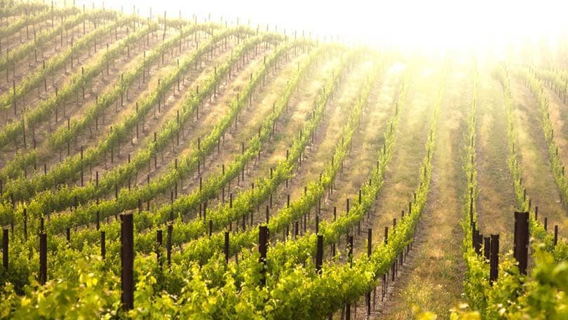 California Wine – Will it be Merlot or a Cabernet Sauvignon