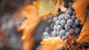 Ice Wine – Facts and Information