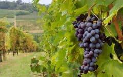 wine-61