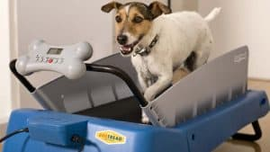 Tips for Finding the Best Dog Treadmill
