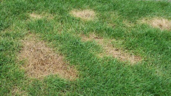 brown-grass-1