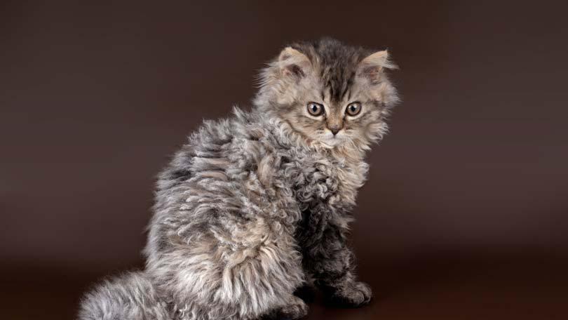 Best Type Of Cat Litter Uk