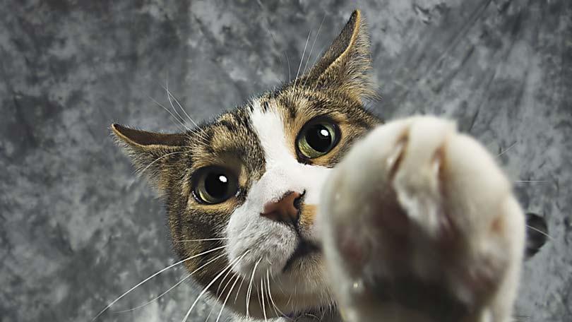 Feral Cat Scratch Fever