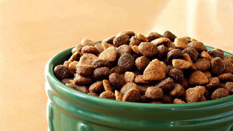 Switching Dog Food Brands How To Do So Safely